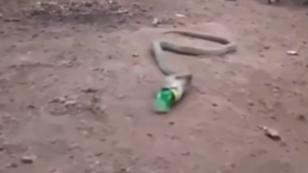 VIDEO | Víbora vomita botella de plástico ¿por contaminación ambiental?