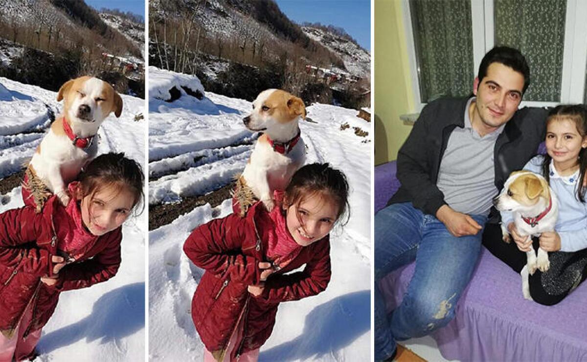 Niña recorrió más de dos kilómetros sobre la nieve para llevar a su perro  al veterinario