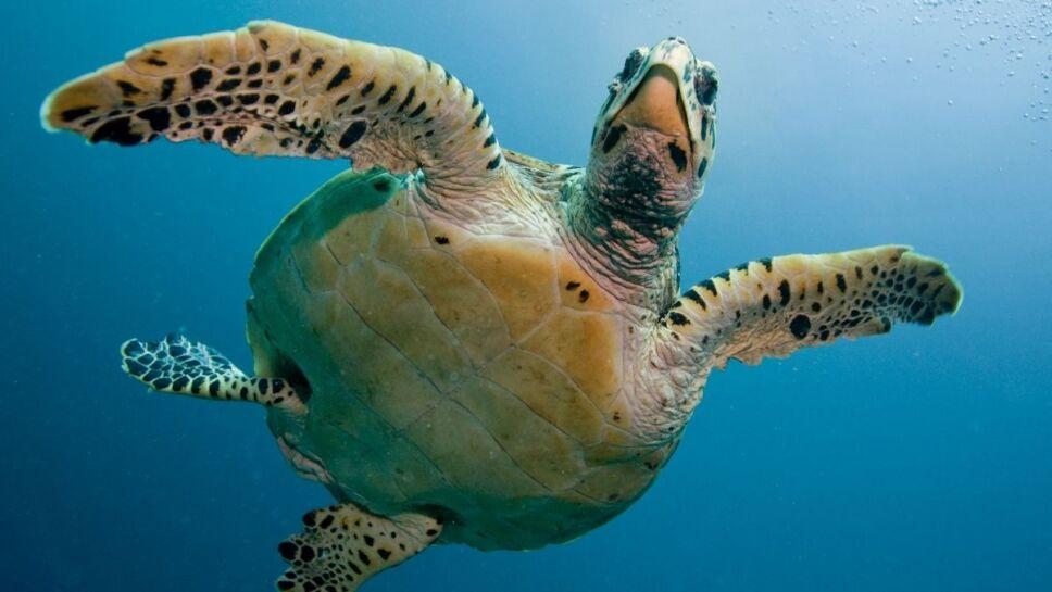 animales, peligro de extinción c.jpg