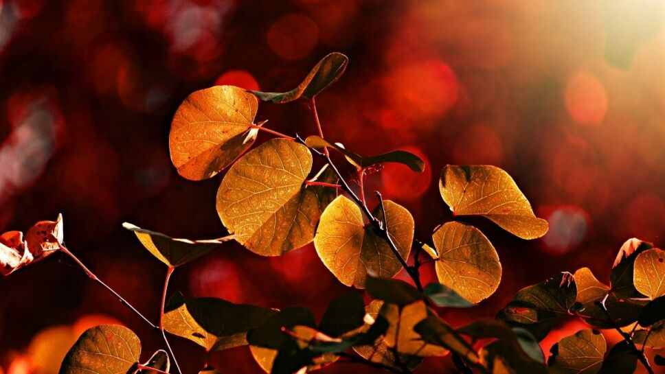 Equinoccio de otoño, cuándo, México b.jpg
