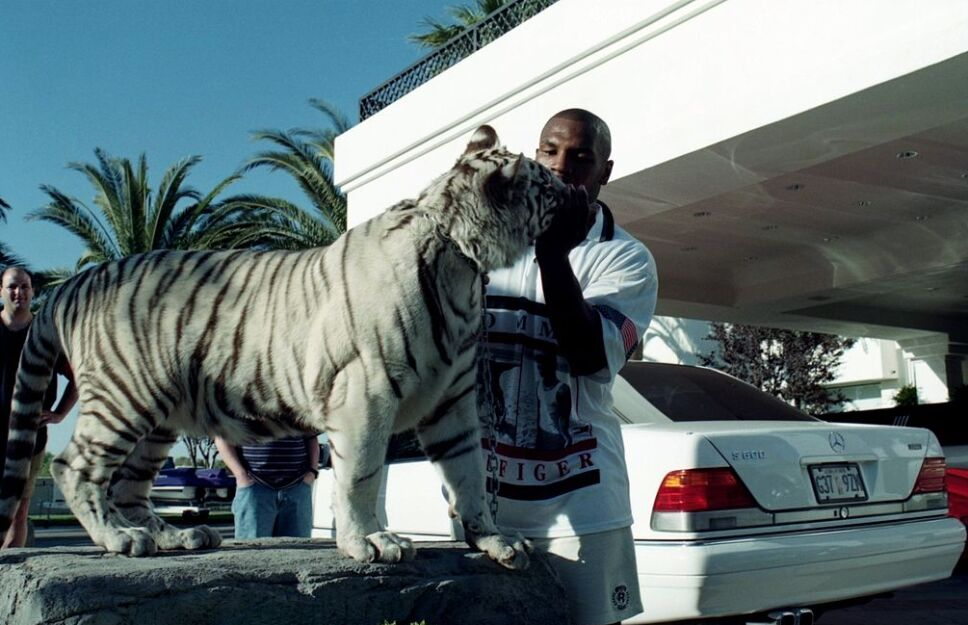 Mike Tyson ama a sus Tigres