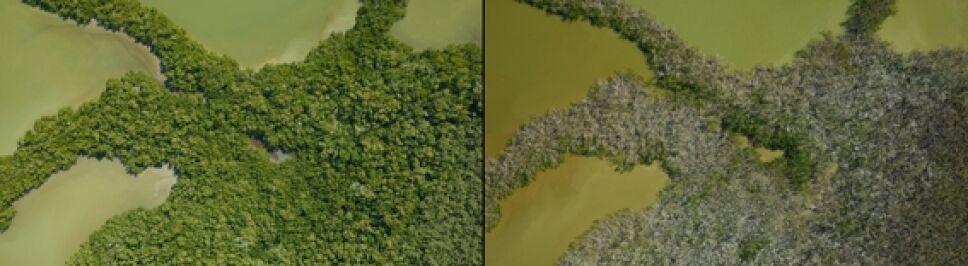 manglares de Florida.jpg