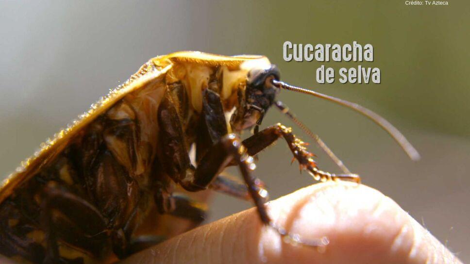 Crédito_ Súper 4 _ Tv Azteca-112.jpg