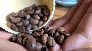 Jacques Ramarlah, un agricultor y emprendedor muestra granos de café de la variedad Bourbon Pointu en la empacadora Kafen Drazana en el pueblo de Ampefy, región de Itasy