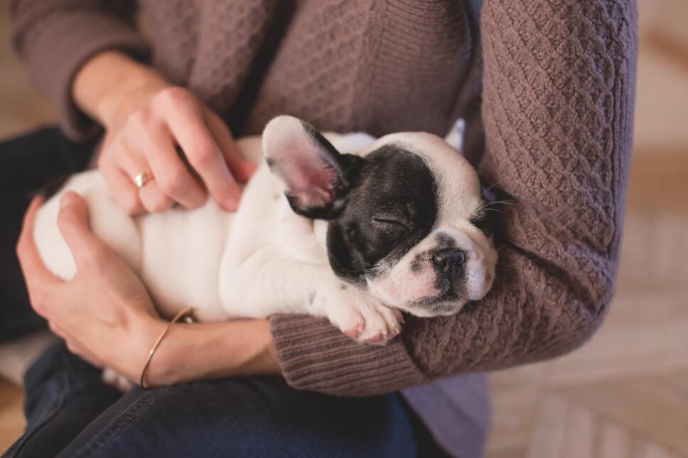 Ayudar a tu perro a socializar