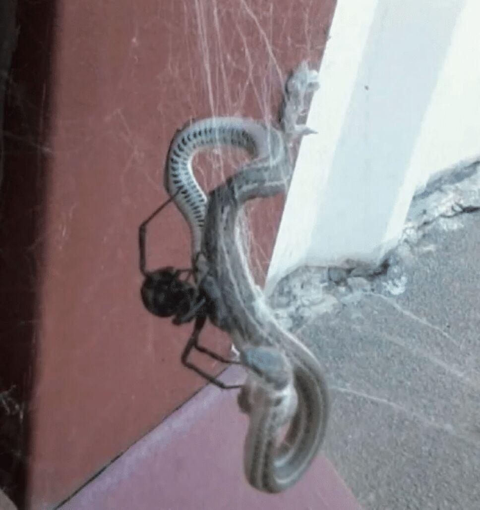 Araña, serpiente, estudio.png