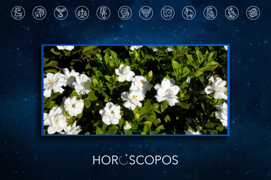 Gardenia HOR