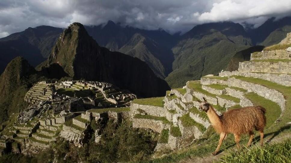 Imagen de archivo de una llama vista en la ciudadela de Machu Picchu, en el Cusco, Perú