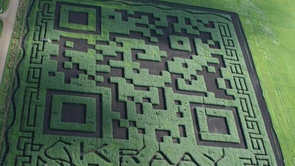 Uno de los mayores códigos QR que se han construido supera el tamaño de 20 mil metros cuadrados y se logró en Lacombe, Canadá.