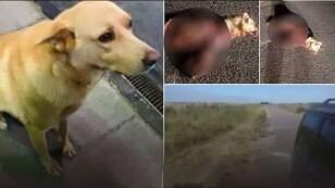 Agresión a perro