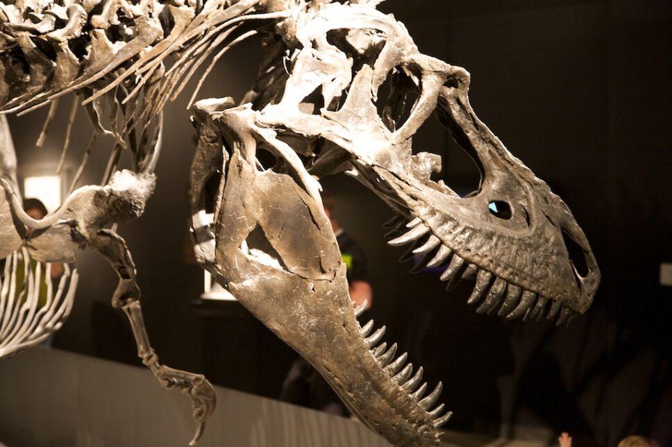 Dinosaurios, México 2.jpg