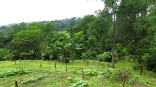 Amazonía-deforestacion-reforestacion-bosques-conservacion-colombia-9.jpg