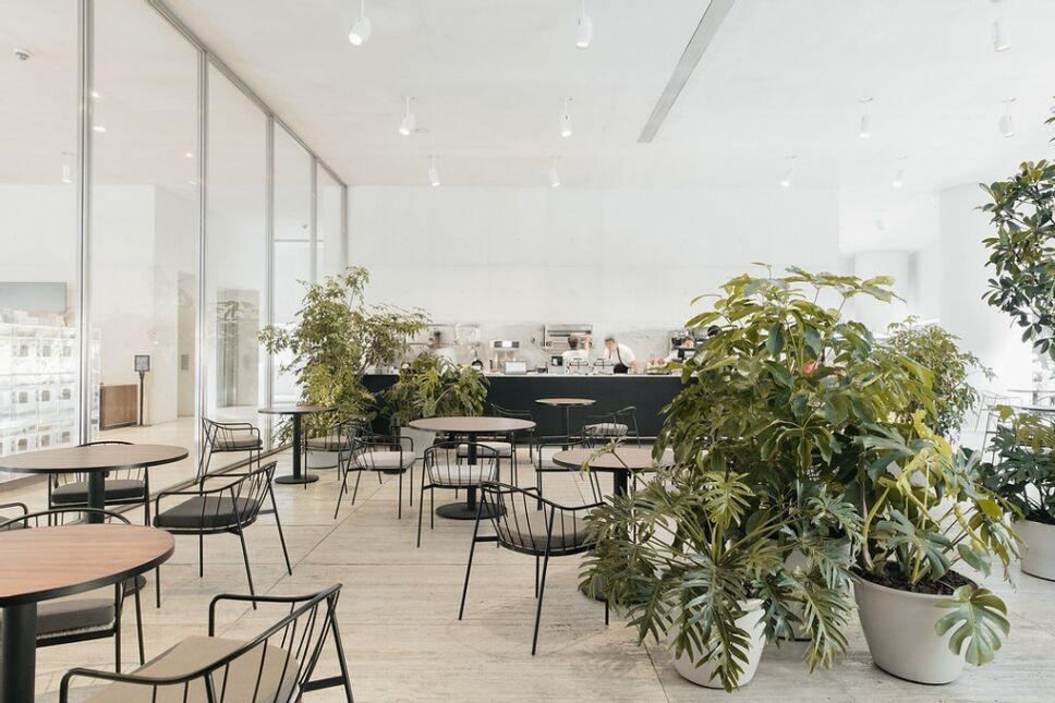 eno-cafeteria-museo-jumex.jpeg