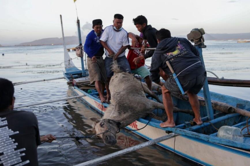 Rescatistas arriesgan su vida para salvar a caballos atrapados por el volcán Taal