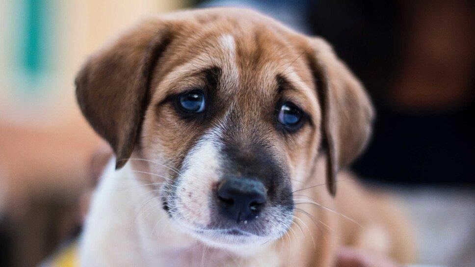perros.jpg