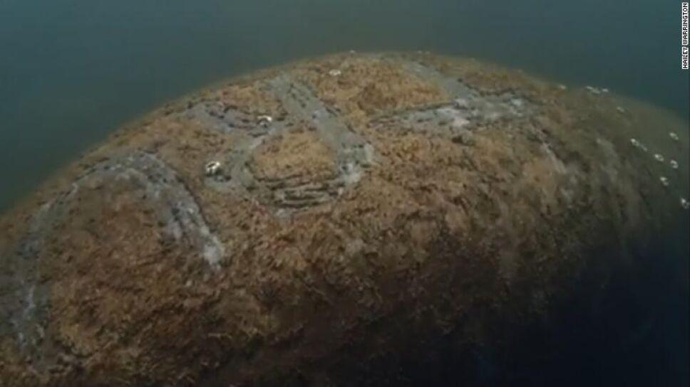 Escriben la palabra Trump en lomo de manatí