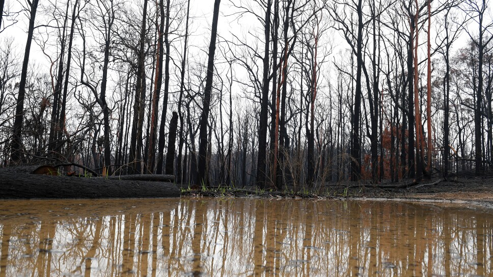 Bushland is seen burnt by fire as rain pools in large puddles at Bilpin