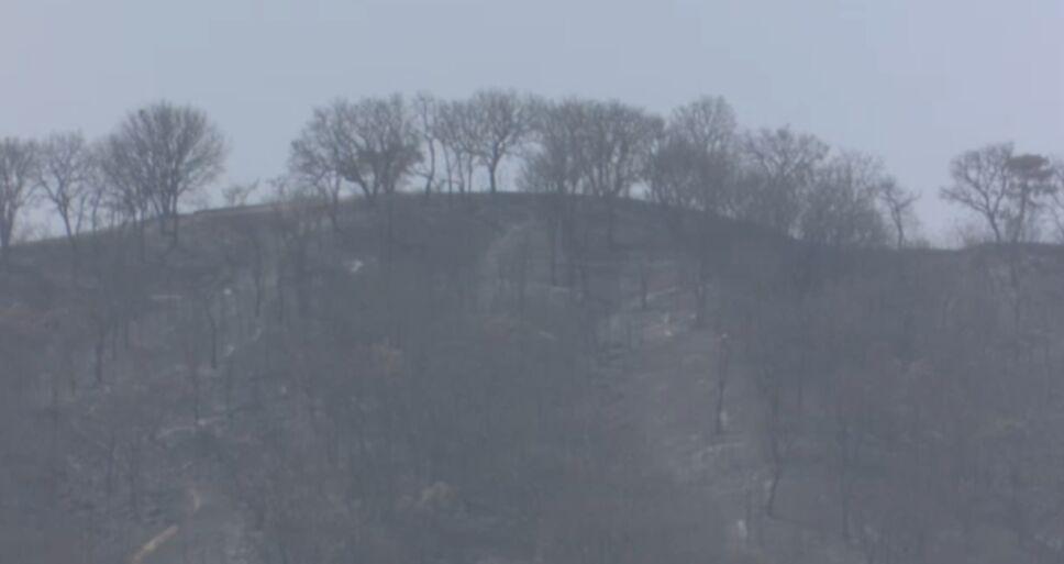 Incendio en Bosque de la Primavera.png