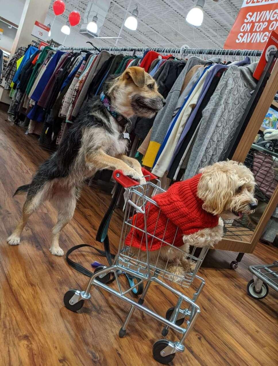 Perrito, empleado, tienda.jpg