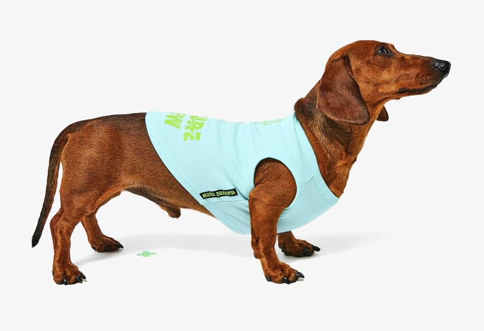 Hacer match en la moda con nuestra mascota está en tendencia y ahora, gracias a Bershka, podrás ir conjuntada con tu mejor amigo peludo.