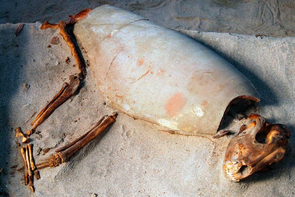 El cementerio de animales más antiguo del mundo se encuentra en Egipto.