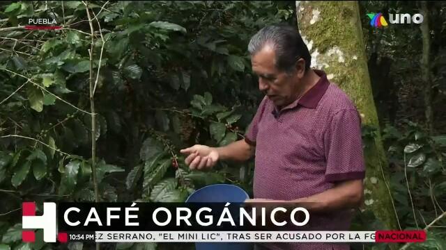 Café orgánico de Puebla