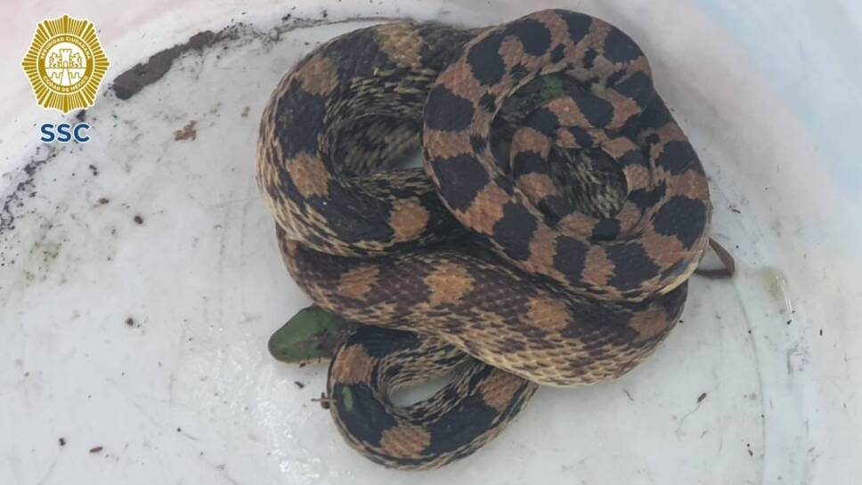 serpiente rescatada