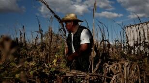 Porfirio García observa su campo de maíz seco en Tepeteopan, estado de Puebla, México